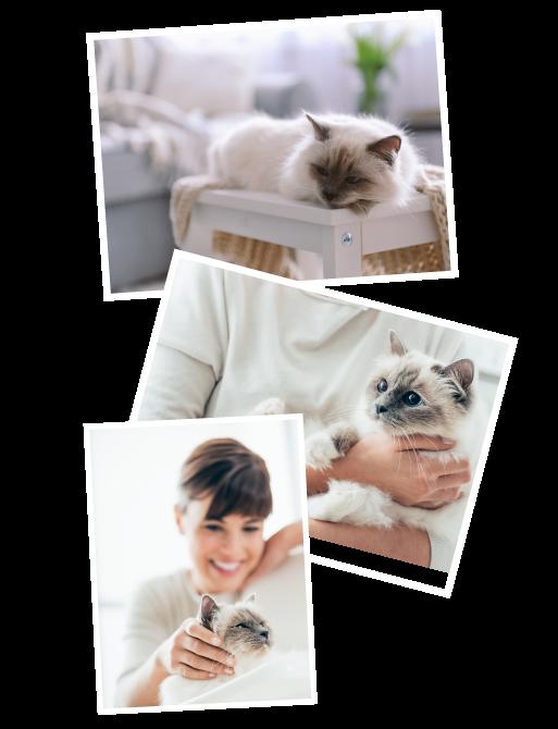 Katzenebetreuung in Braunschweig und Wolfsburg