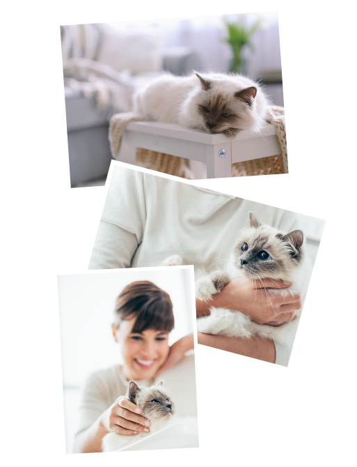 Katzenbetreuung in Heidelberg und Mannheim