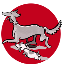 Hundebetreuung in Erlangen und Nürnberg